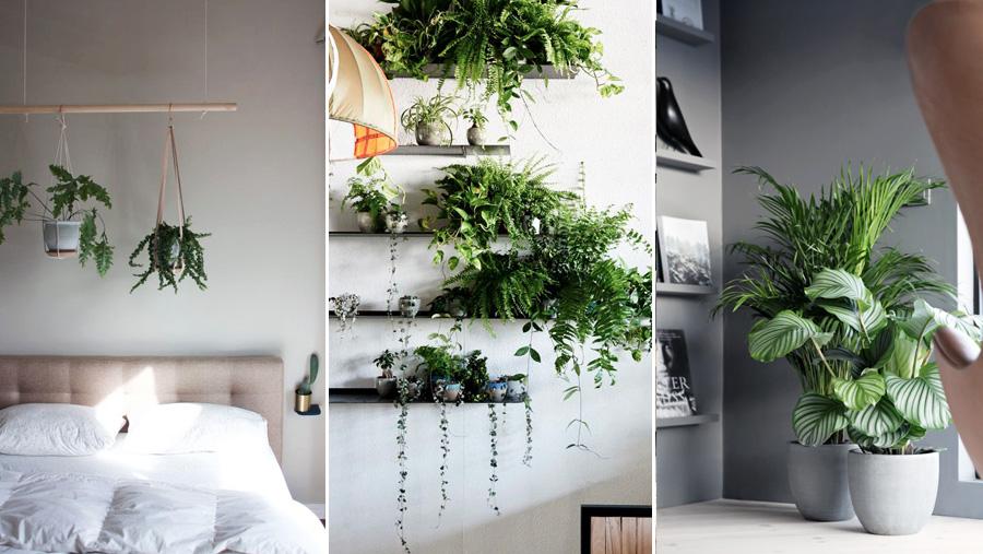 7 sätt att skapa en grön oas inomhus