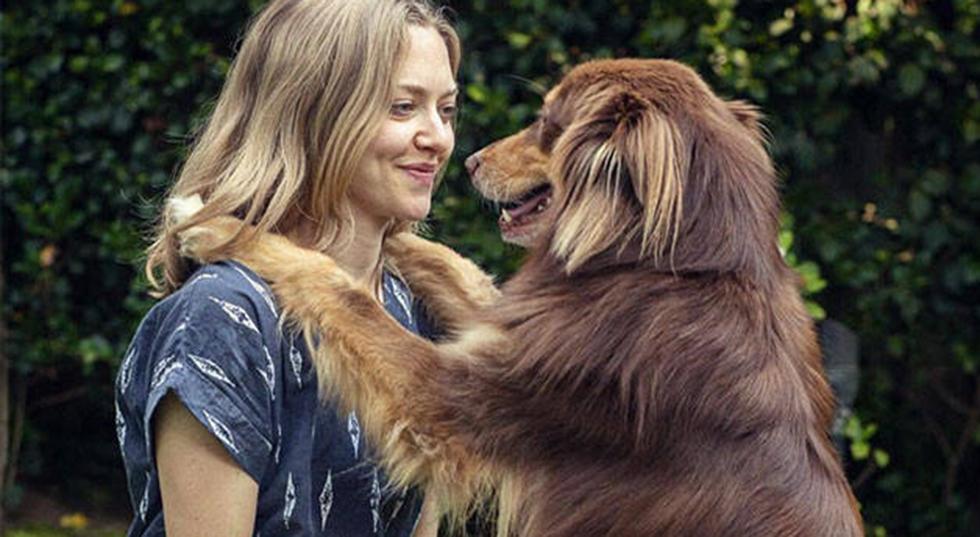 Grattis alla hund–och kattägare –ni är lyckligare än andra!