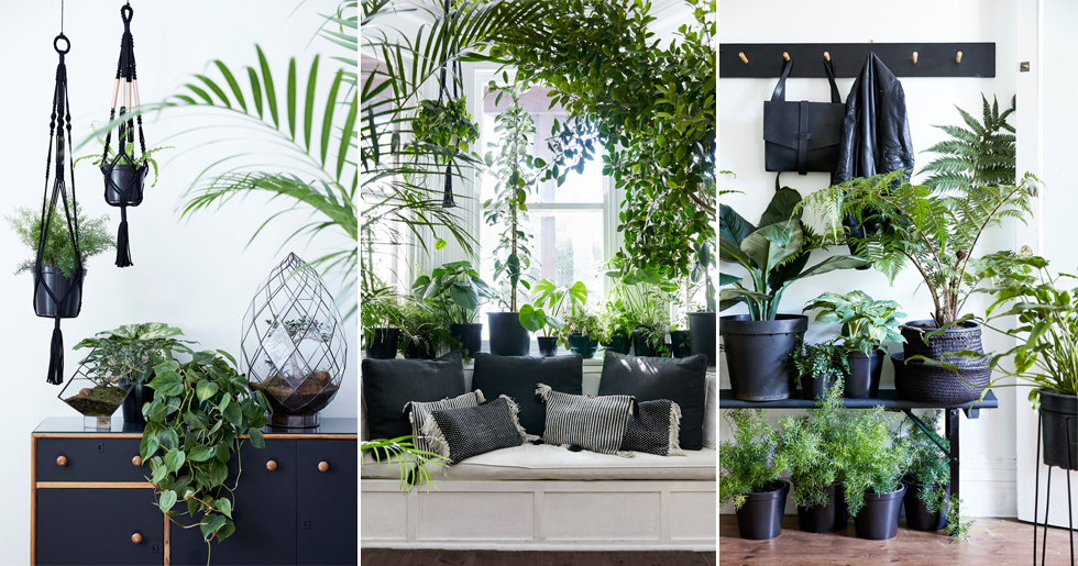 7 trendiga sätt att inreda med växter