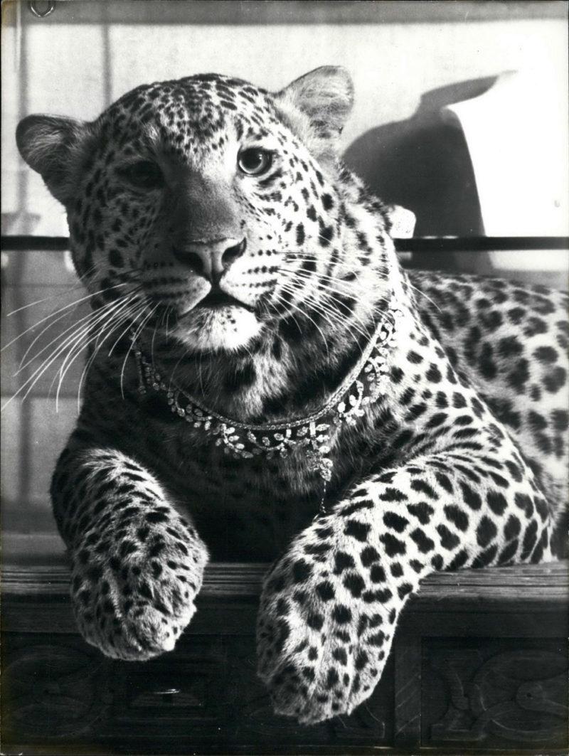 cartier fine jewlery panther