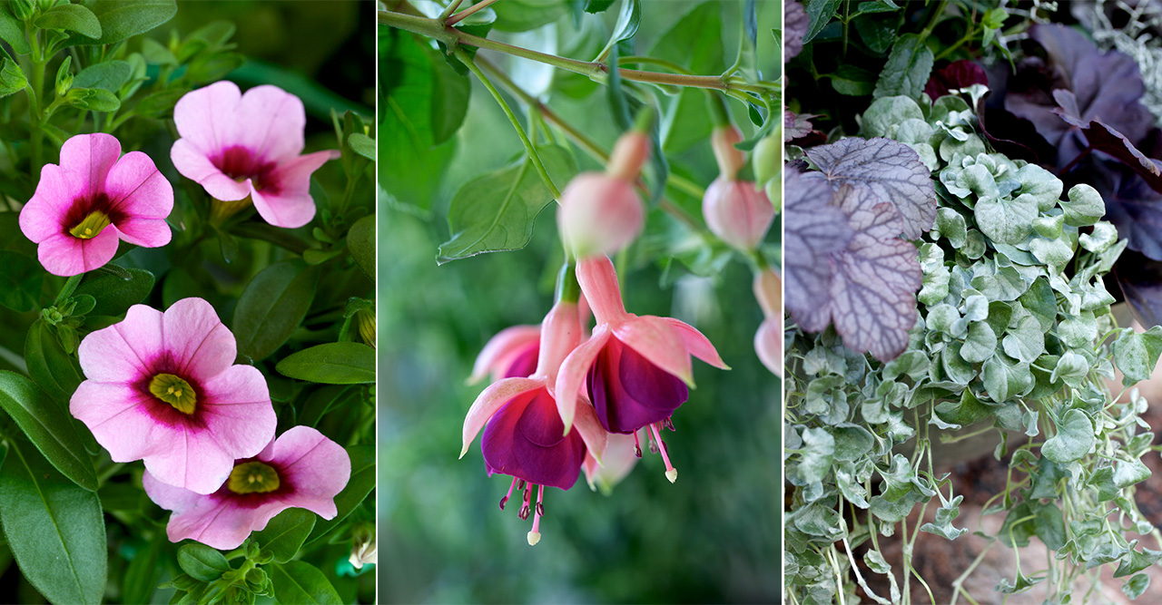 Bästa blommorna och växterna för en skuggig balkong