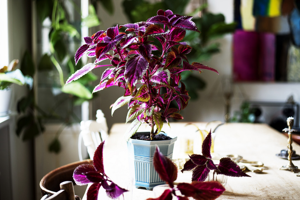 köpa växter stockholm