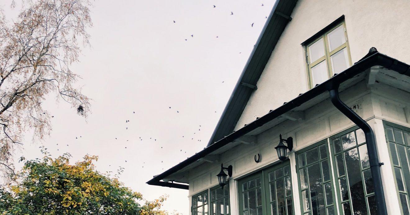 Senaste veckan – och tankar om hösten