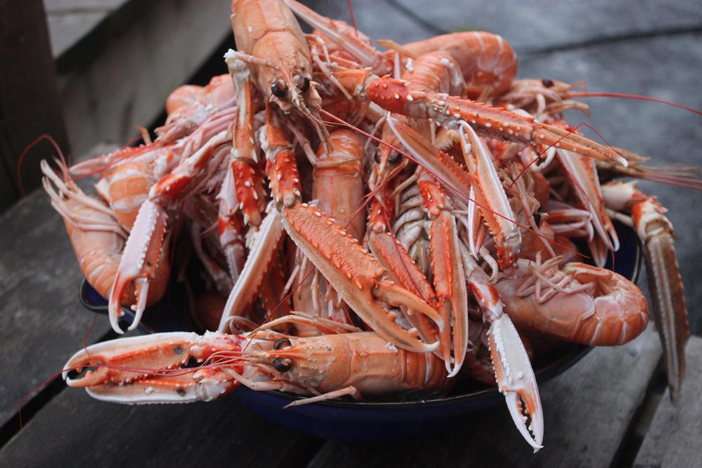 crayfish-