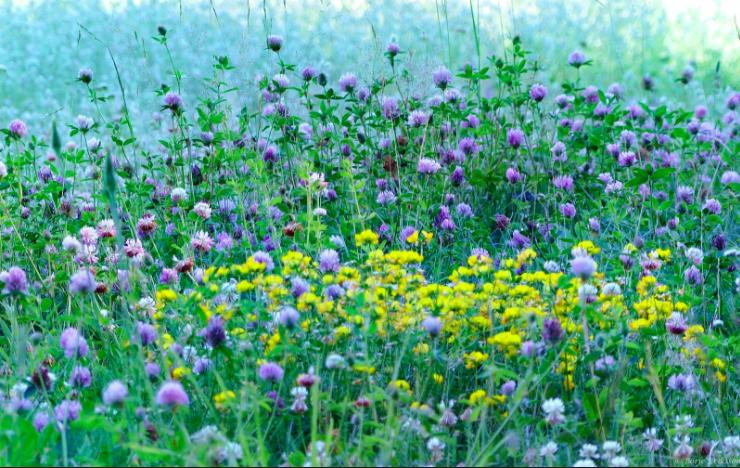 En ny vända med ekologiska nyheter - here you go!