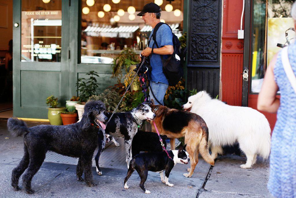 en onsdag i New York med hundar och picknick på taket.